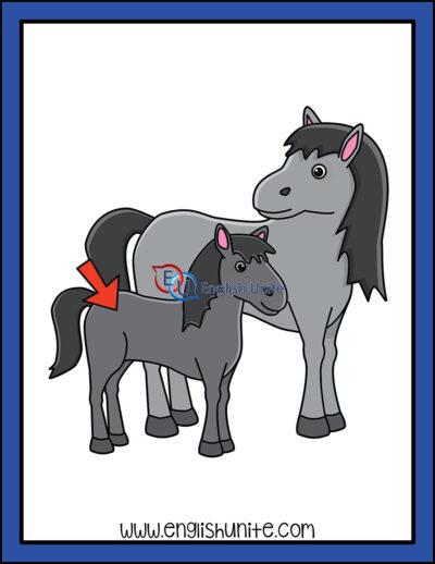 clip art - foal