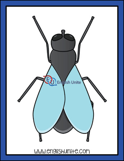 clip art - insect fly