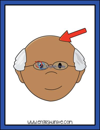 clip art - scalp