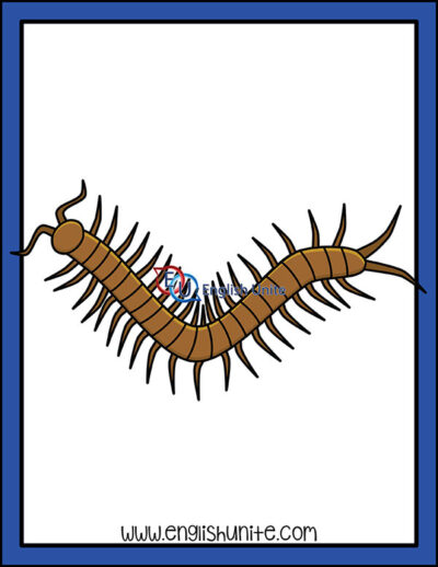 clip art - centipede